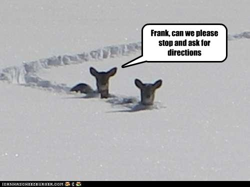 funny-pictures-deer-are-lost.jpg